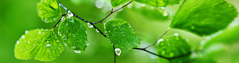 Water-Drops-on-Leaves